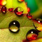 La Belleza de la Macrofotografía en 12 Imágenes